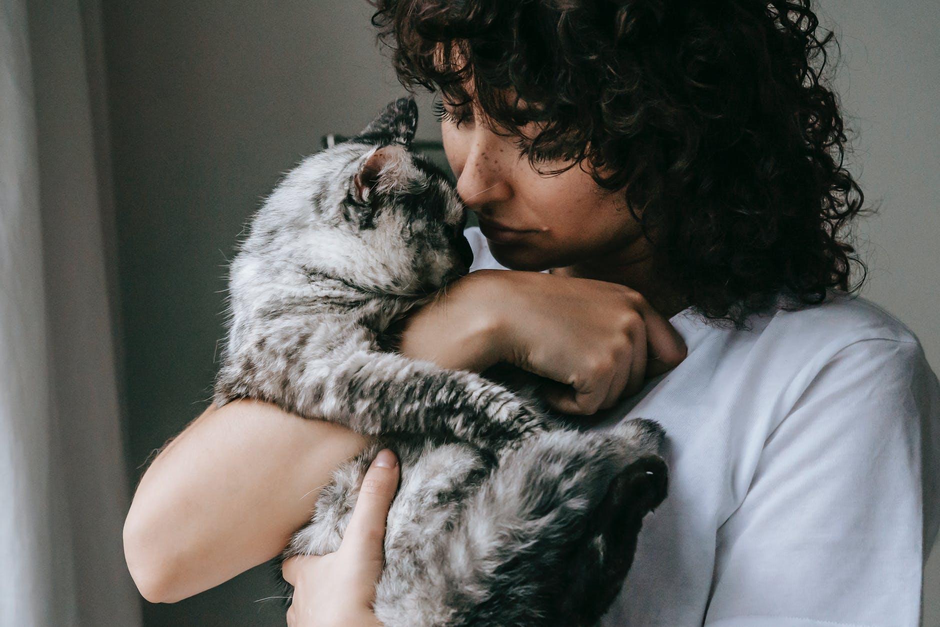 Saiba quantos anos vive um gato e como cuidar dele para que fique com você por mais tempo