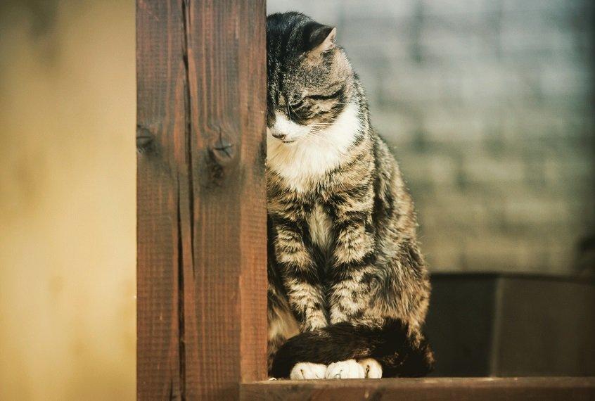 5 mudanças de comportamento que mostram que seu gato está solitário